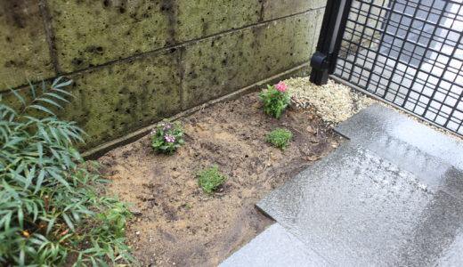 【外構】玄関周りに彩りを!お花の植え替えをしました